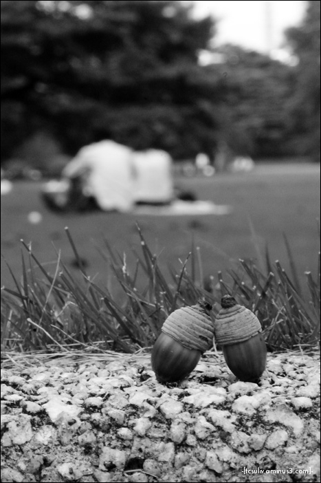 acorn couple 団栗カップル (shinjuku gyoen)