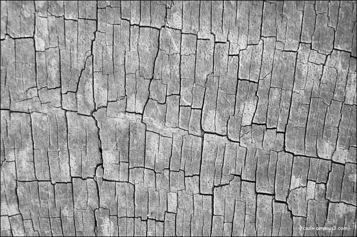 cracked wood 細片木 (shinjuku gyoen)