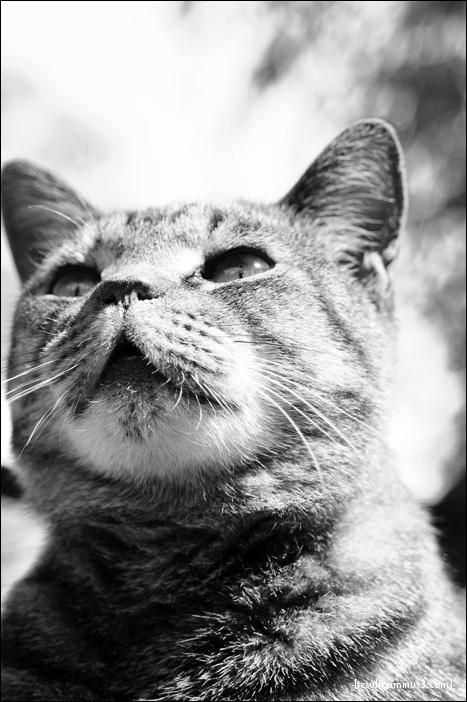 kittyportrait 猫ポートレート (gifu, japan)