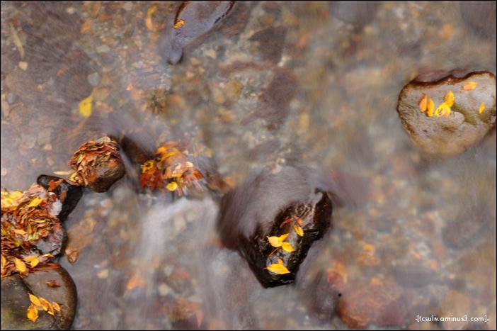 stream with leaves (yamanashi)