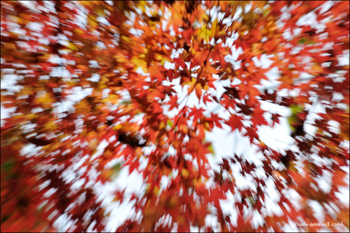zooming leaves of autumn (Rikugien)