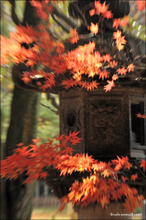 leaves and lantern (Rikugien)