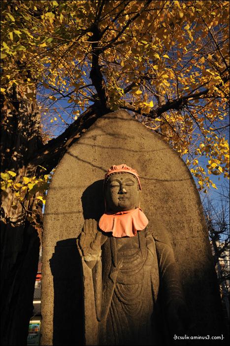 buddha with gingko