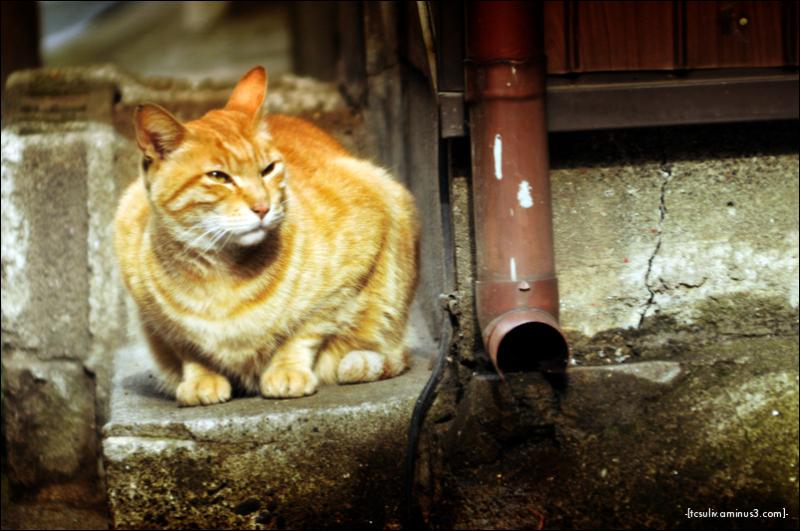 chinatown kitty (yokohama)