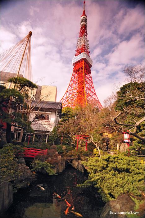 tokyo tower garden 東京タワー庭