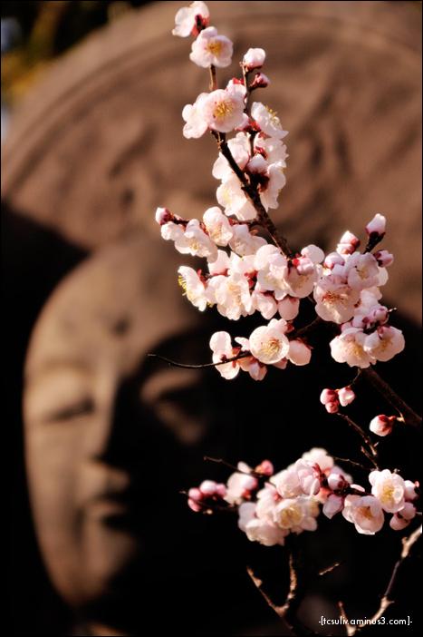 buddha with sakura 桜と仏 (Nezu)