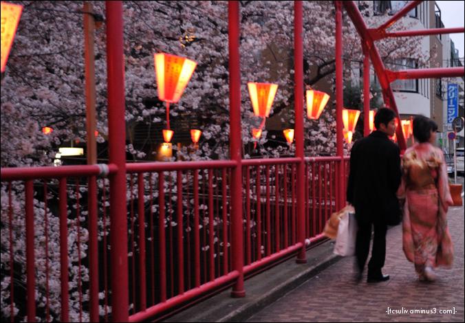Kimono-clad sakura spectator