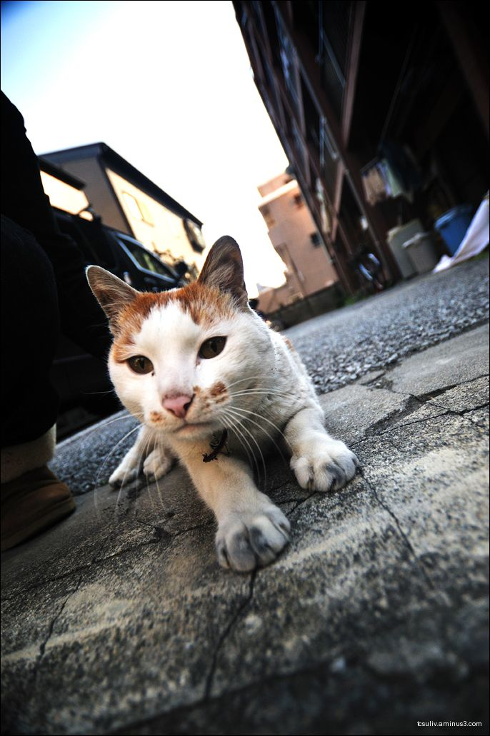 Komagome kitty (Komagome, Tokyo)