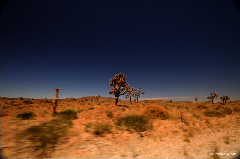 Desert sun 砂漠の太陽
