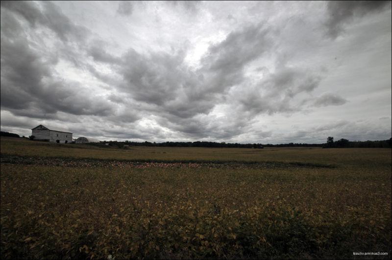 Pumpkin field (Schodack, NY)