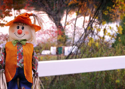 Autumn scarecrow (Nassau, NY)