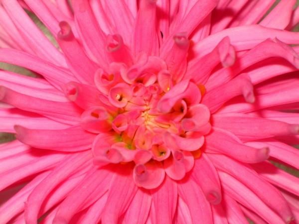 Pink #2