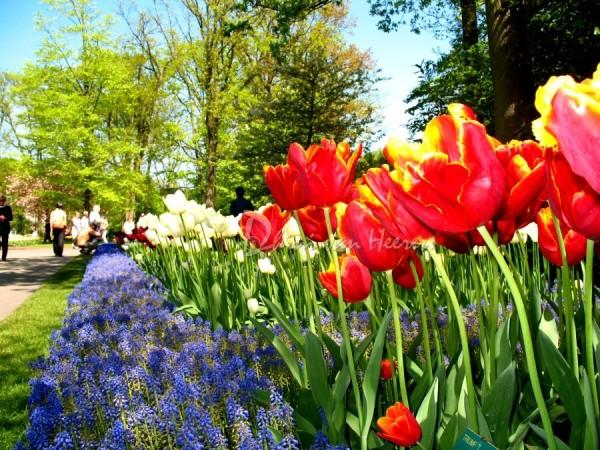 Tulp Garden