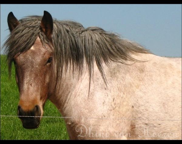 A Horse #