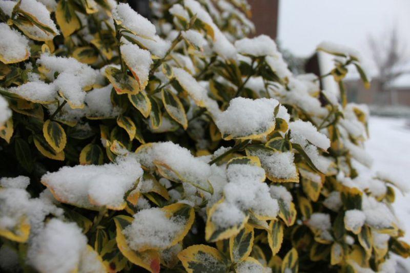 sneeuw 17.12.09 #2