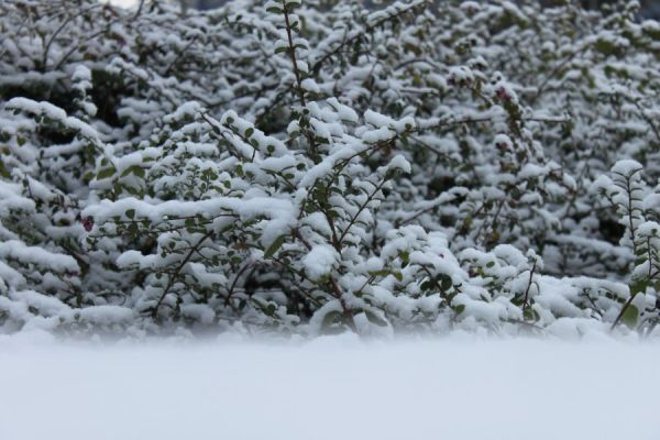 sneeuw 17.12.09 #3