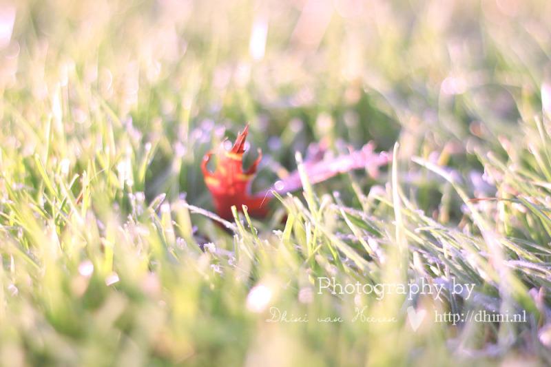 Rijp op het gras