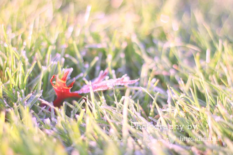 Leaf op grass
