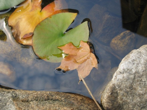 first fallen leaf