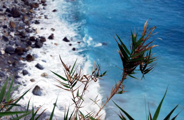 flora on the beach