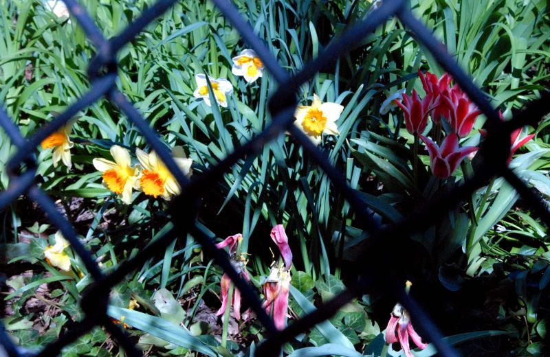 how to soften a fence