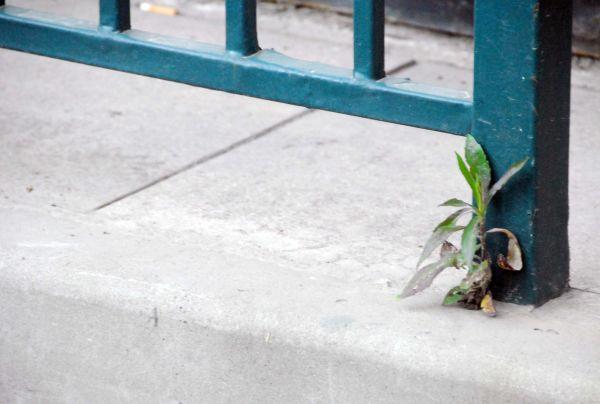 how to soften a sidewalk