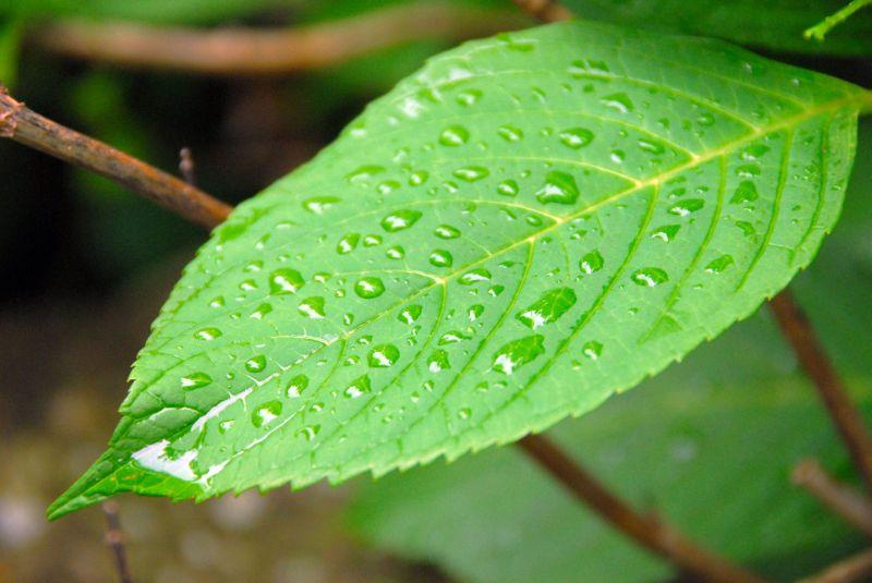 dew drop canvas