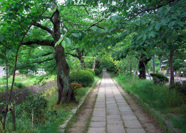 哲学の道/tetsugaku no michi/philosopher's walk