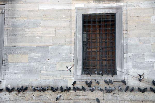bird façade