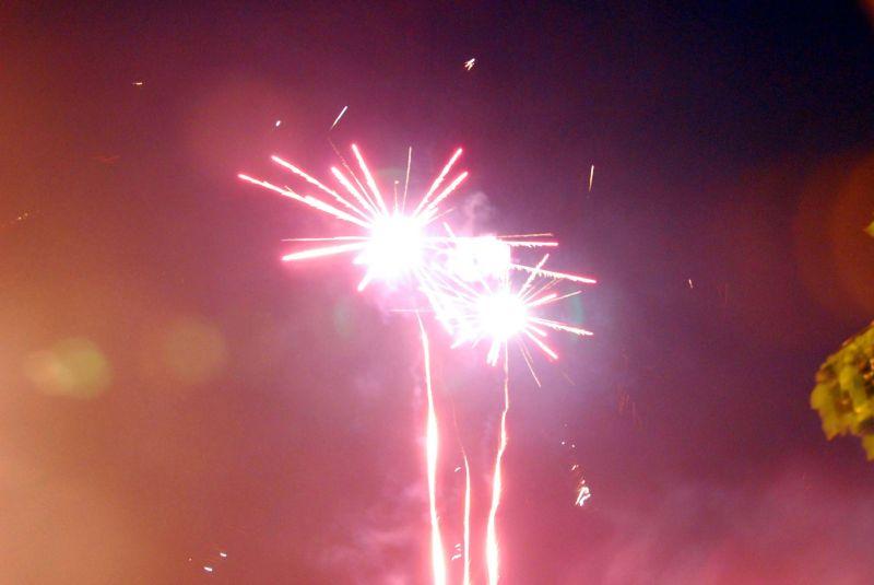 fireflower countdown: cichorium