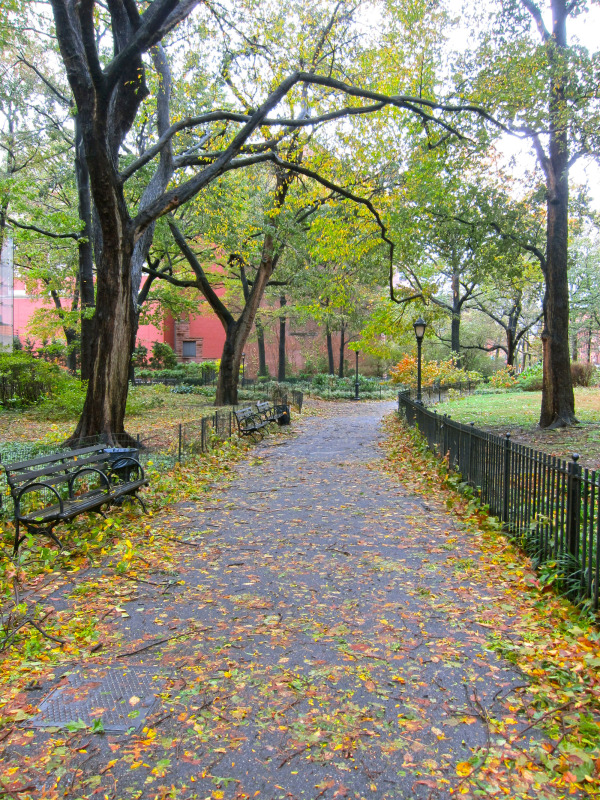 littered paths of the amnh