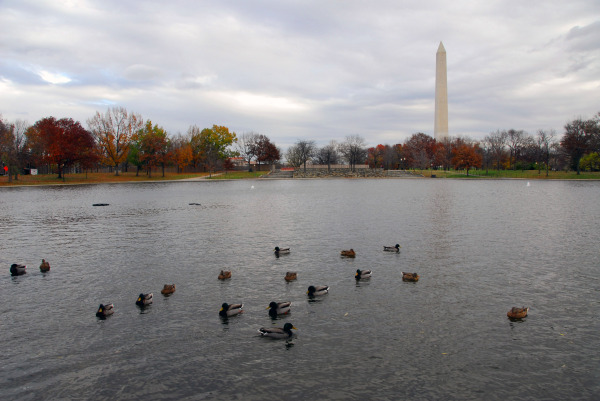 duck-filled landscape