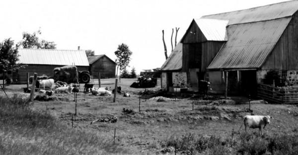 A Family Farm