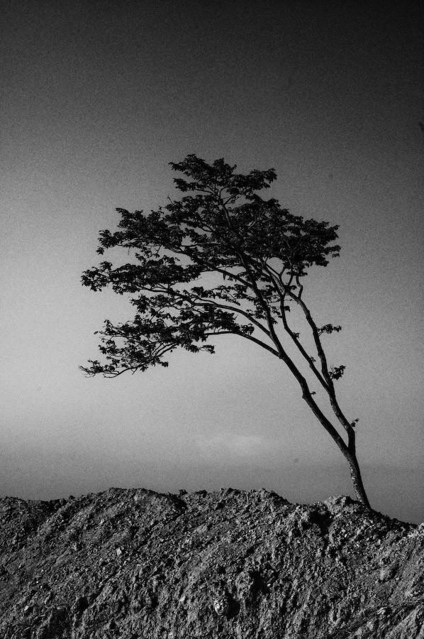 A tree near the road to Veracruz
