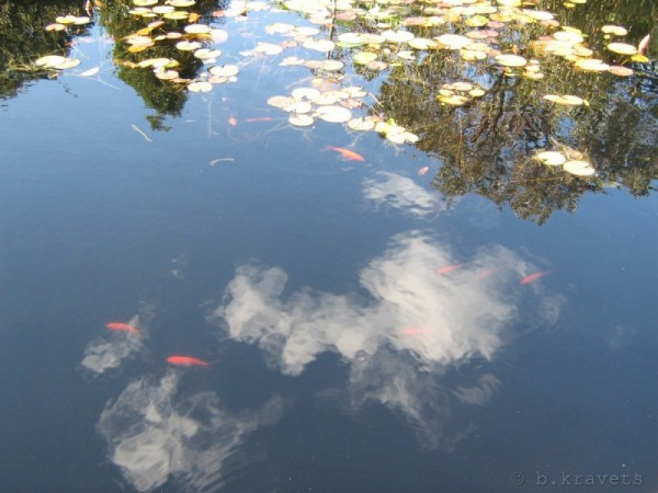koi and clouds