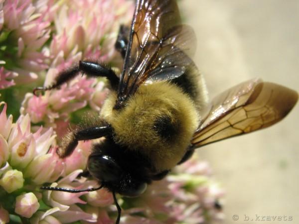 pollination III