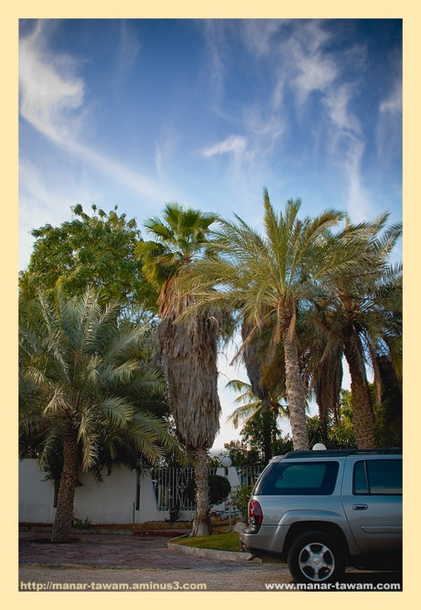 Sky, palm trees, & a car...