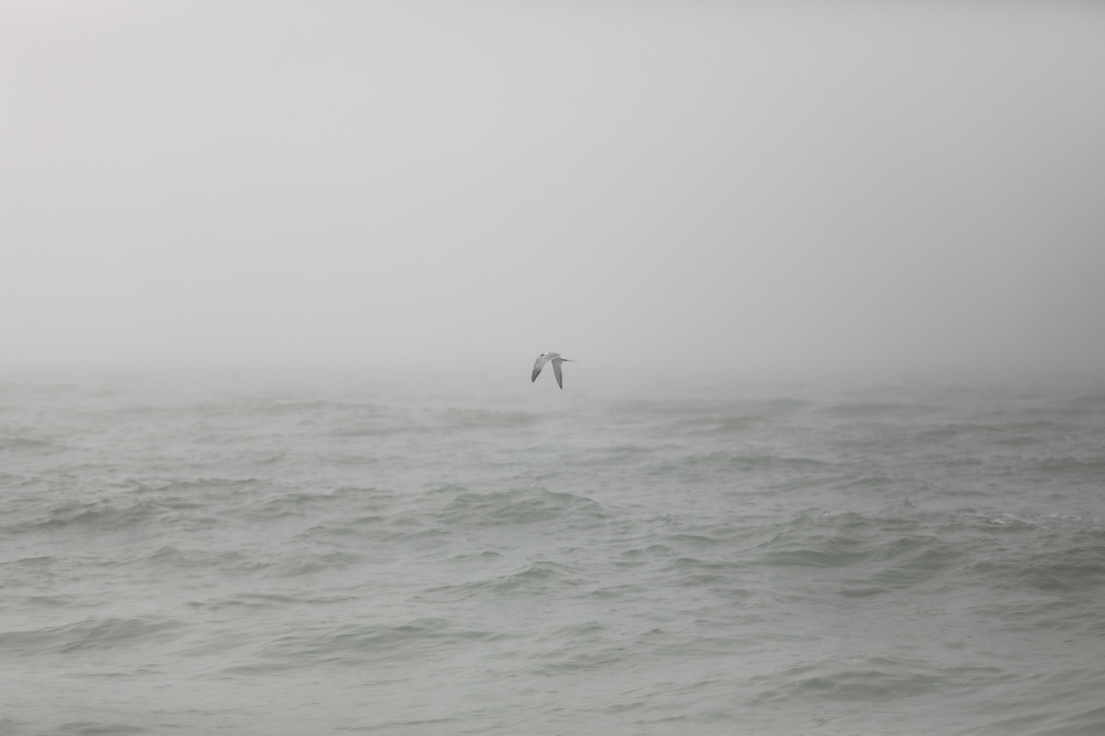 A tern flies quietly through the morning fo