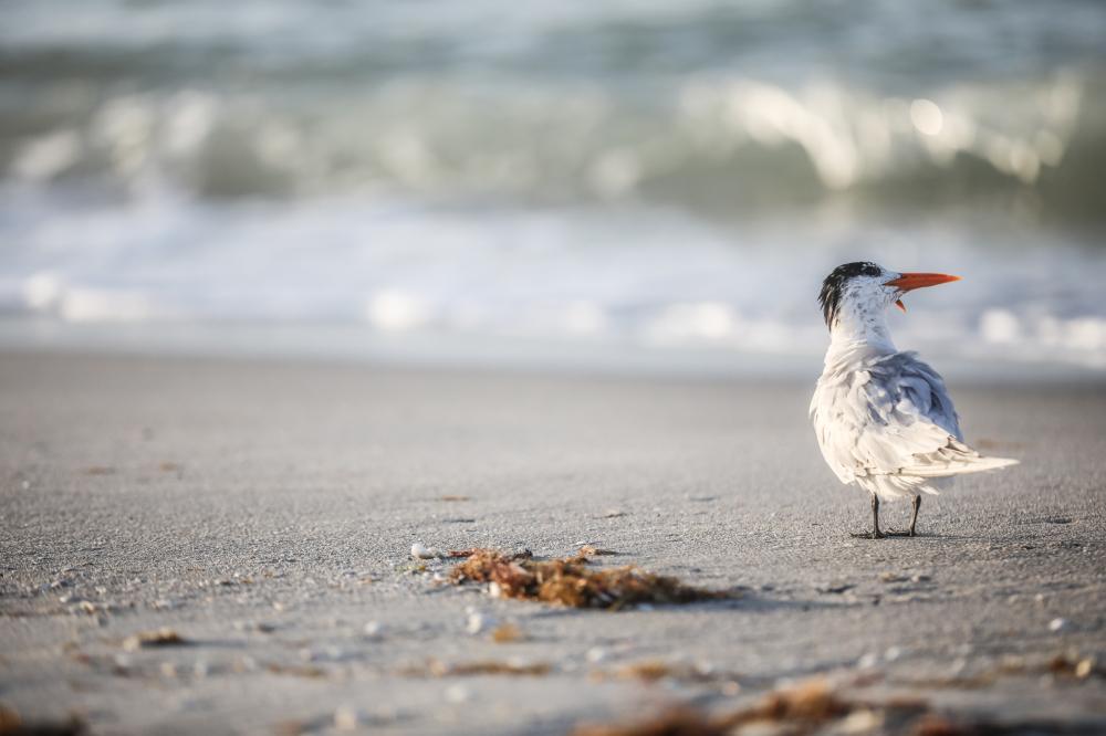 Lone bird on beach