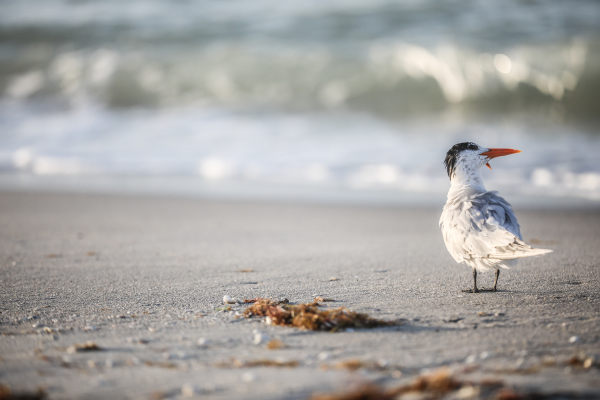 Lone bird on beach