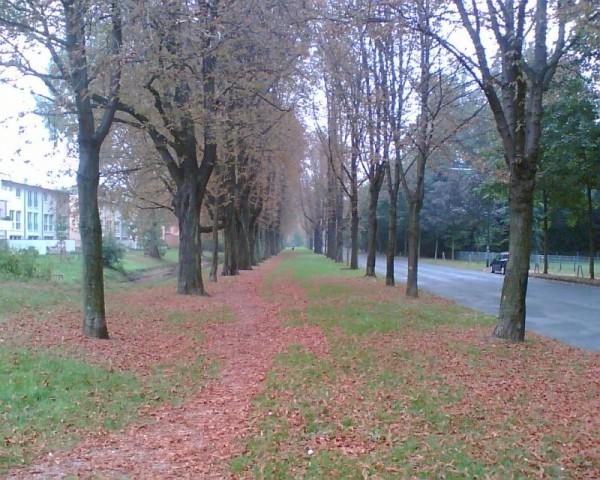Nice Line of Trees