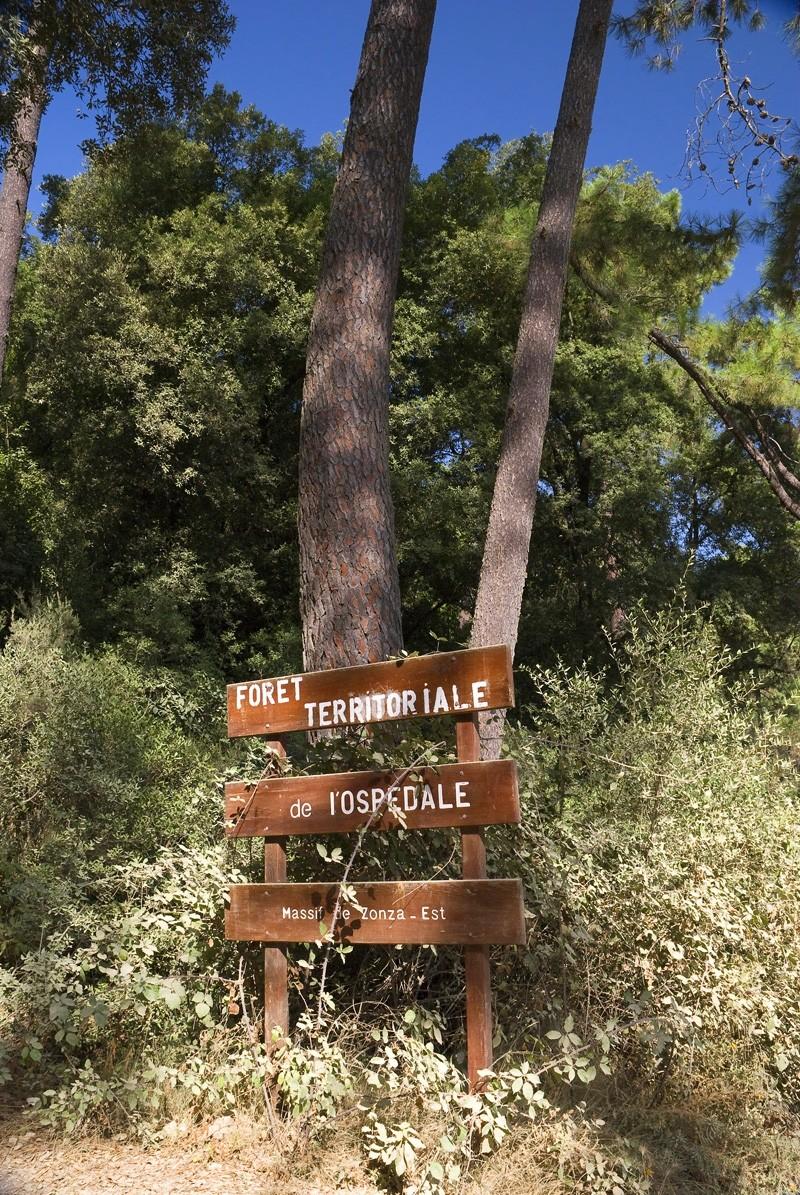 Forêt de l'Ospedale