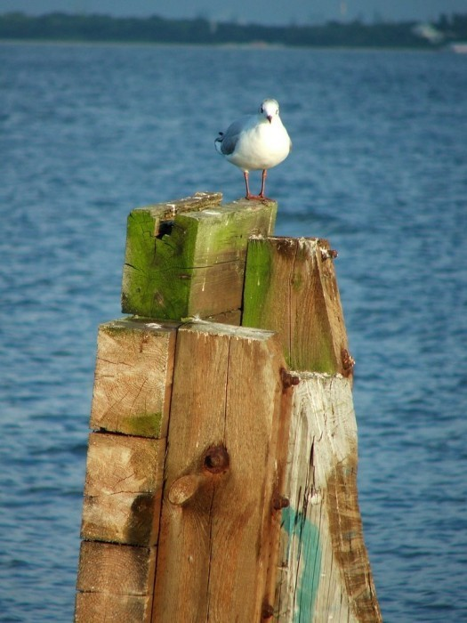Seagull at Sopot beach