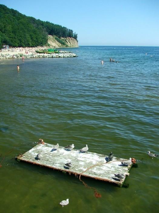 Birds on a raft at Baltic seashore