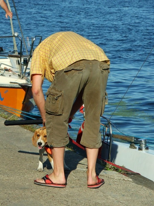 Dog getting on a salboat