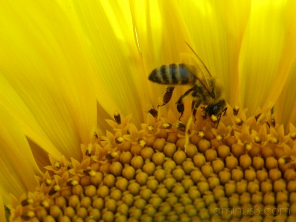 The busy bee (IV)
