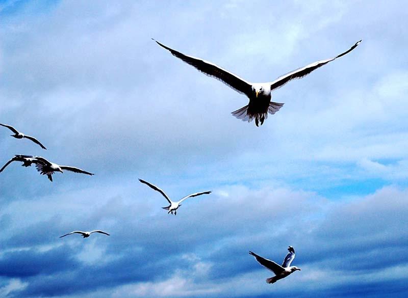 seagulls at Aldeburgh