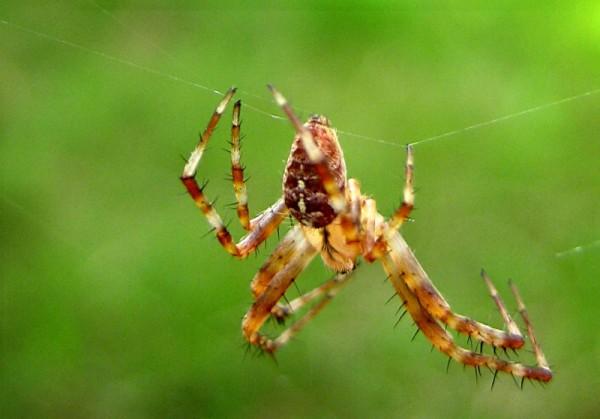 spider upside down