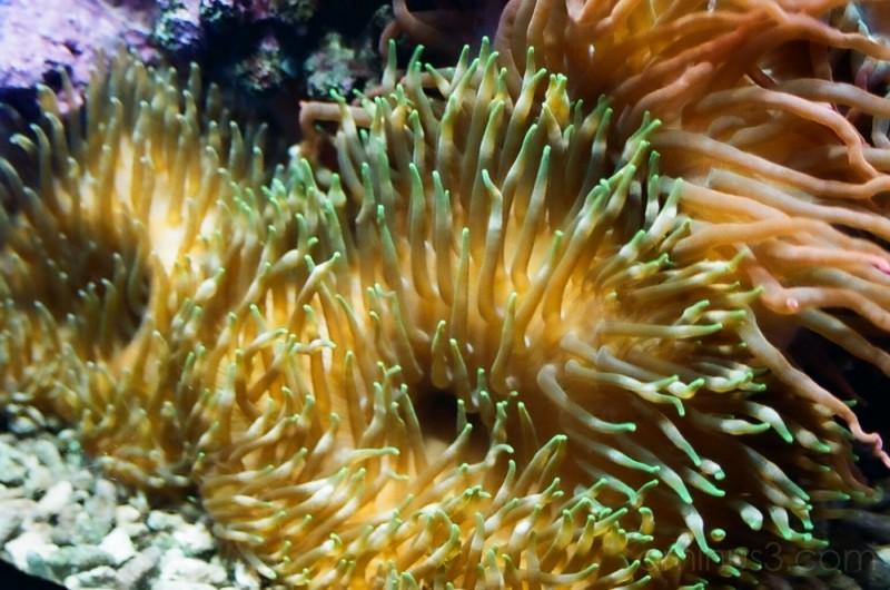 Where is Nemo?