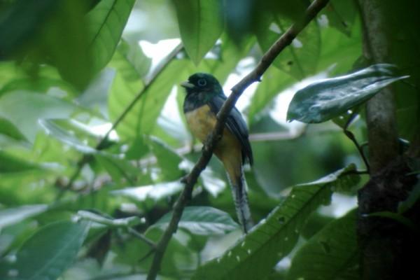 Corcovado National Park, Bahia Drake, Costa Rica